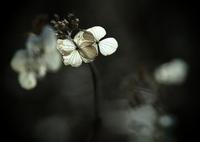OLYMPUS E-M5で撮影した(慈愛の光)の写真(画像)