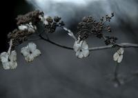 OLYMPUS E-M5で撮影した(栄華の果て)の写真(画像)