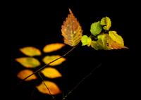 OLYMPUS E-5で撮影した(ある秋の日の印象)の写真(画像)