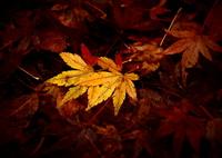 OLYMPUS E-5で撮影した(降り積もる秋の色)の写真(画像)