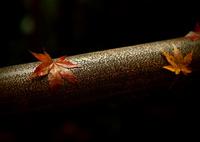 OLYMPUS E-5で撮影した(仄かに晩秋の色  其の参)の写真(画像)