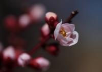 OLYMPUS E-5で撮影した(この春生まれ♡ ②)の写真(画像)
