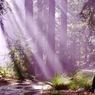 幻想的光芒-紫-