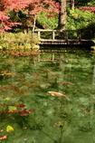 モネの池!