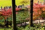 紅葉のモネの池