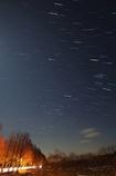 メタセコイヤ星景