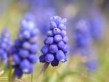 Petit Blue