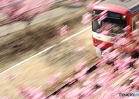 CANON Canon EOS Kiss X6iで撮影した(河津桜と新1000形vr2)の写真(画像)