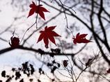 秋から冬へ・・・