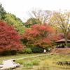 昭和記念公園の晩秋