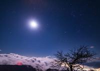 NIKON NIKON D750で撮影した(枯木と眺める夜)の写真(画像)