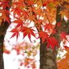 香嵐渓の紅葉02