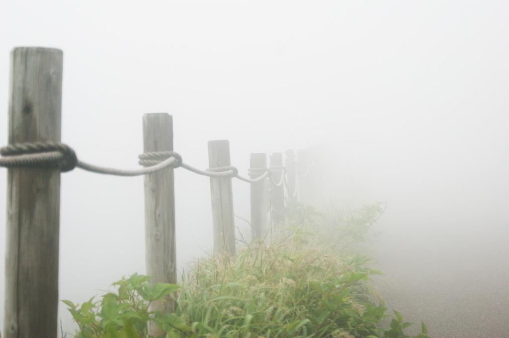 夢中で霧中