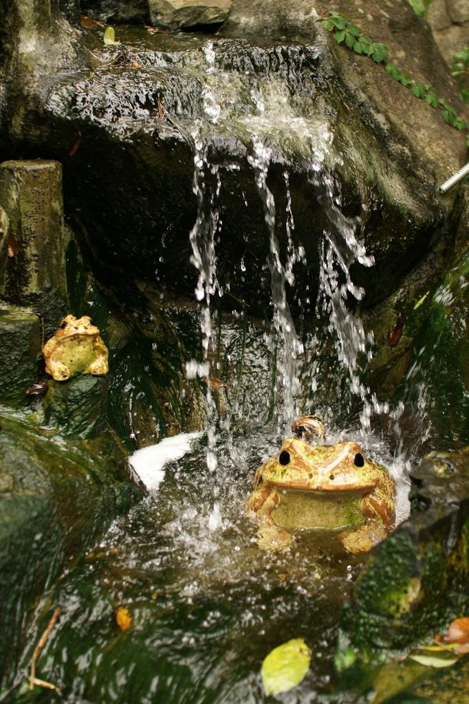 カエルの行水