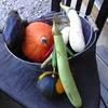 小さな野菜畑 2