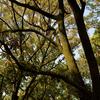 緑の羽衣を纏った木