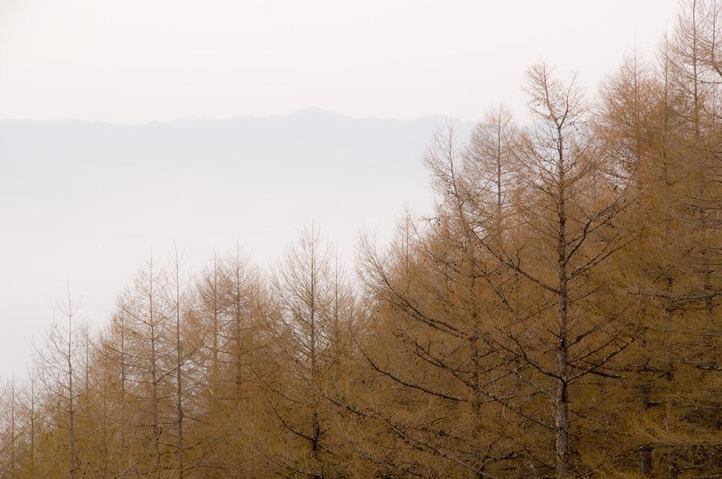 八千穂高原の朝
