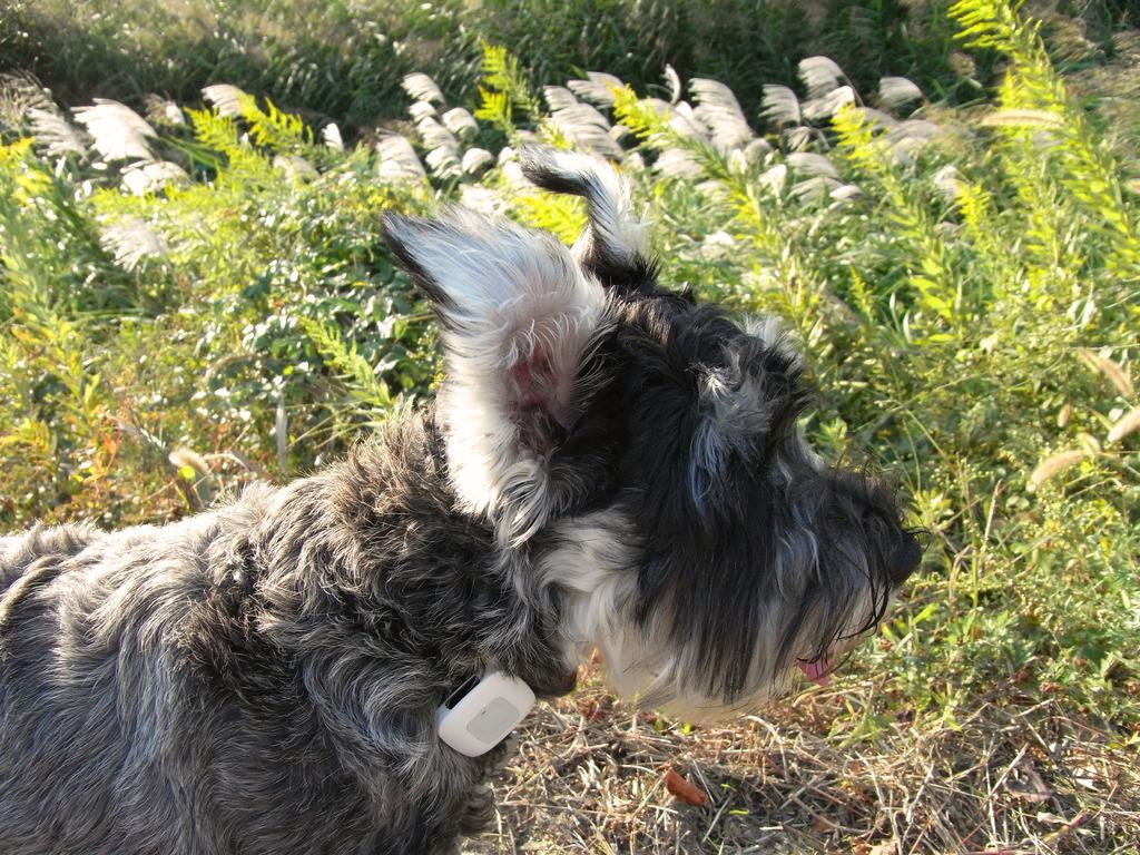 秋風に揺れる耳