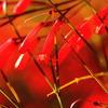 紅色気分^^♪