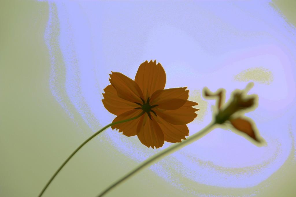お花のオーラ♪♪