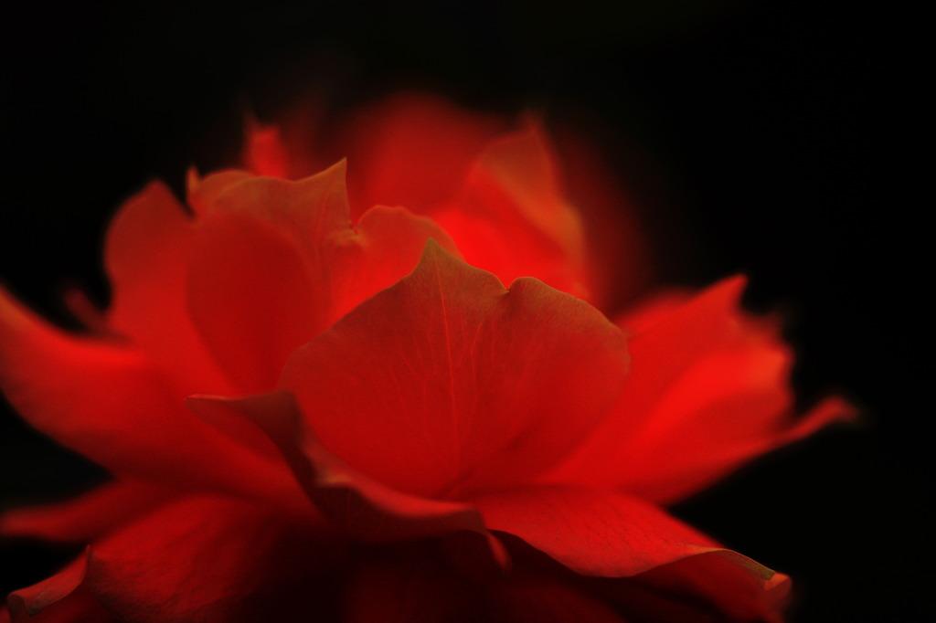 炎の花びら♪