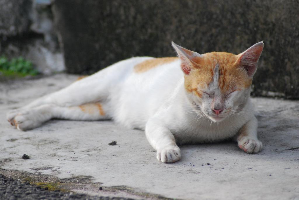 猫 只 の 紀 錄