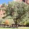 大樹の下の結婚式