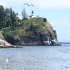 灯台と海鳥たち