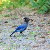 青い鳥現る