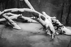 凍り始めた川