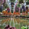 アンデスの花園