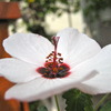 今朝の花 Ⅰ