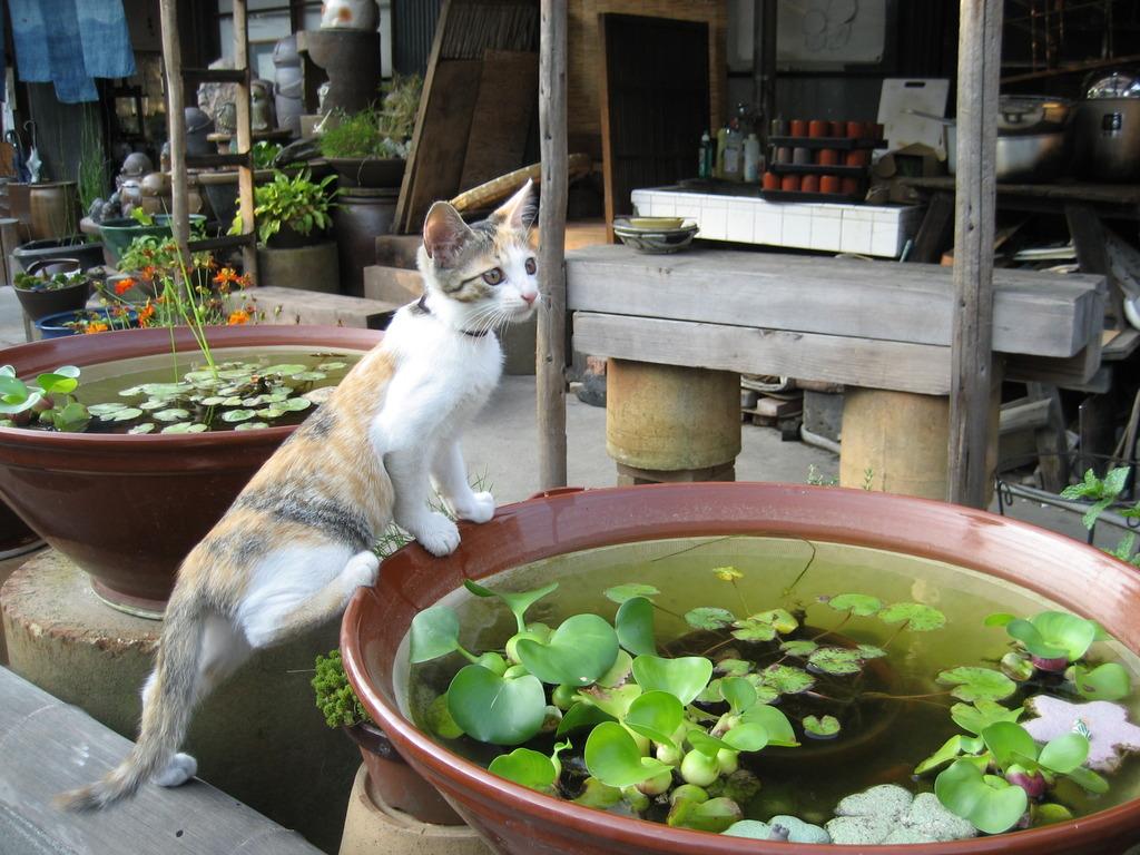 金魚触ってもいい?