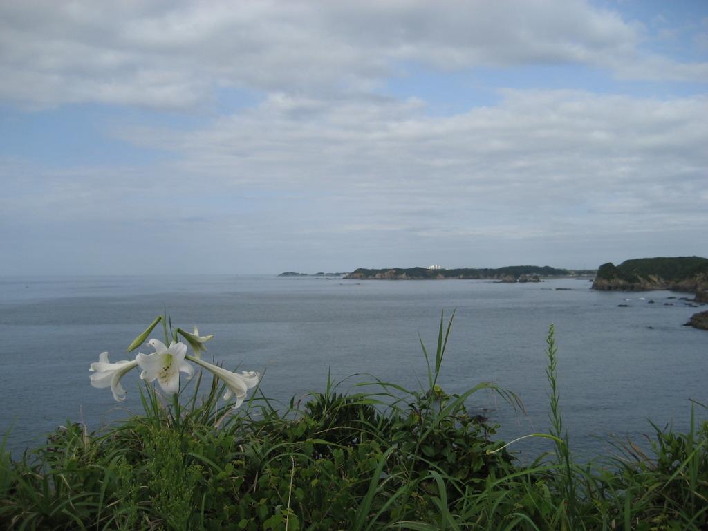 百合咲く岬