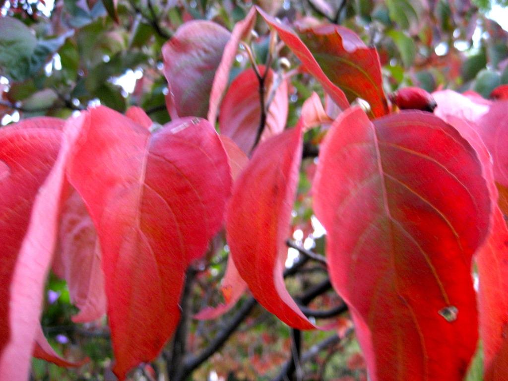 deepens autumn