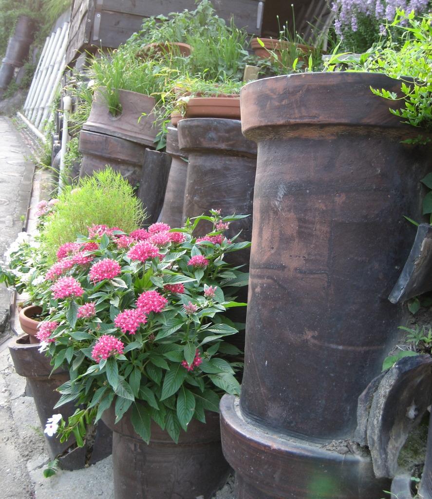 土管に咲く花