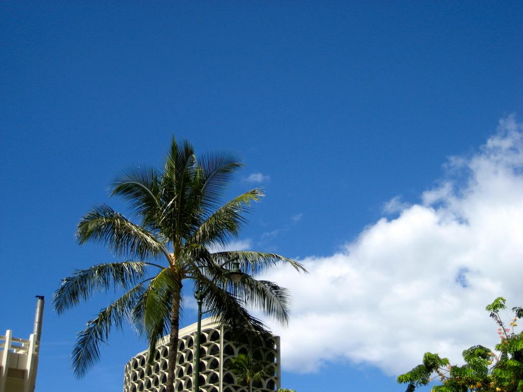 空と椰子と白い雲