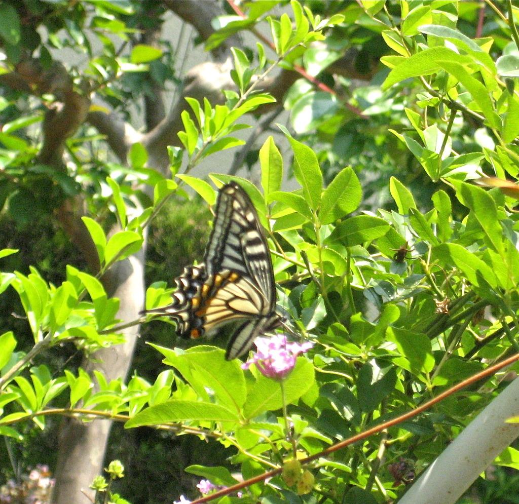 蝶のお食事