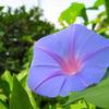 今朝の花 Ⅱ