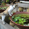 仔猫の好奇心
