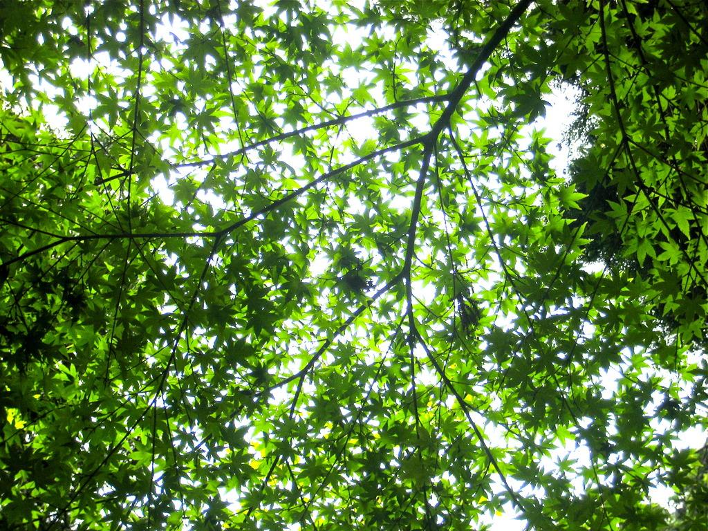 Whispering of leaves