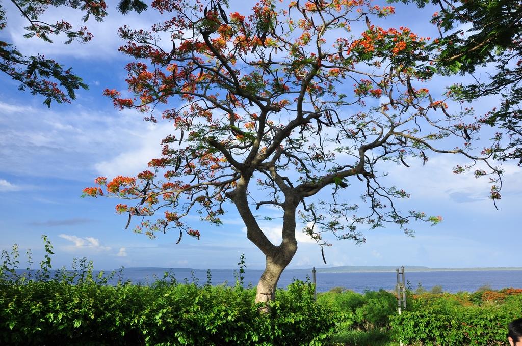 海辺にある木(サイパン)