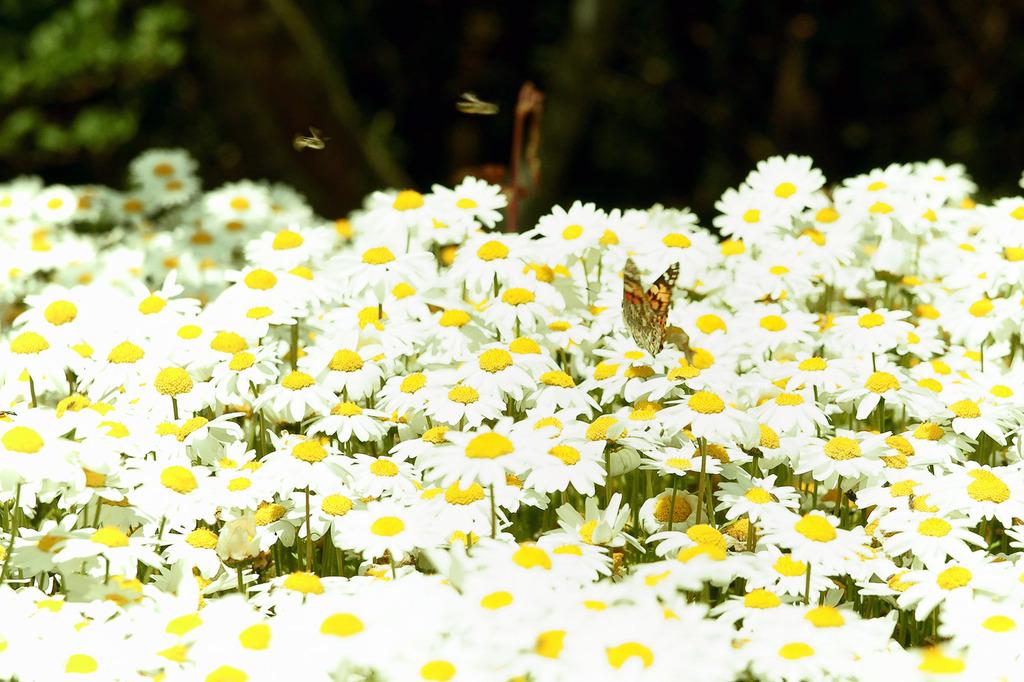 花と蝶+?
