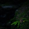 深夜の渓谷にて