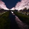 野川_桜ライトアップ