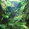 ダルマ蛙とコケの谷
