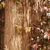 wood & ivy 2