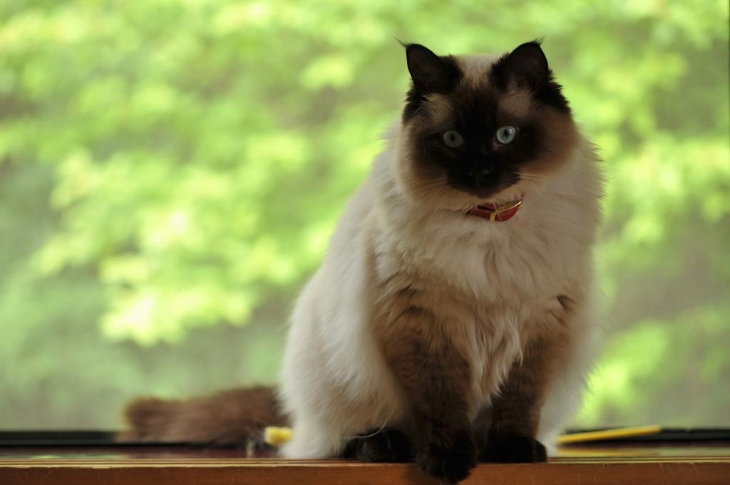 我が家の愛猫モコ