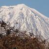 鳥たちの富士山