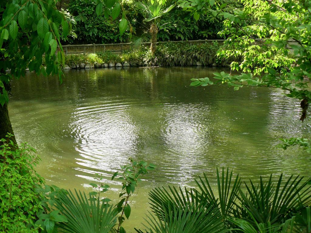 沼?・・・池ですよ。